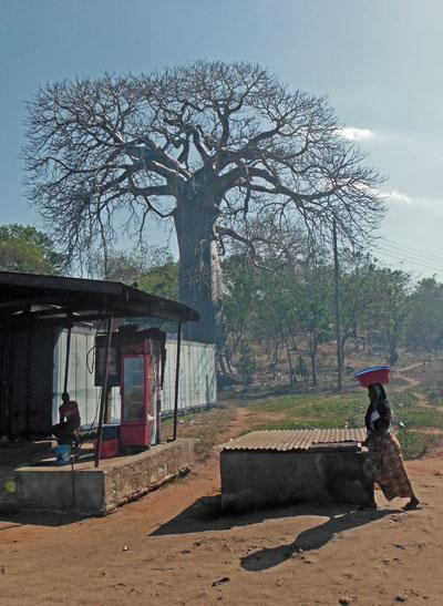 Baobob The Devil Tree