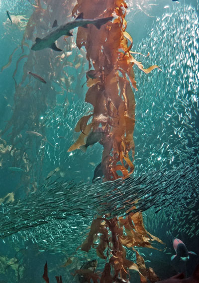 a 63,924 fish rêver of jelly o-rizon from a 4-pliable # of ...