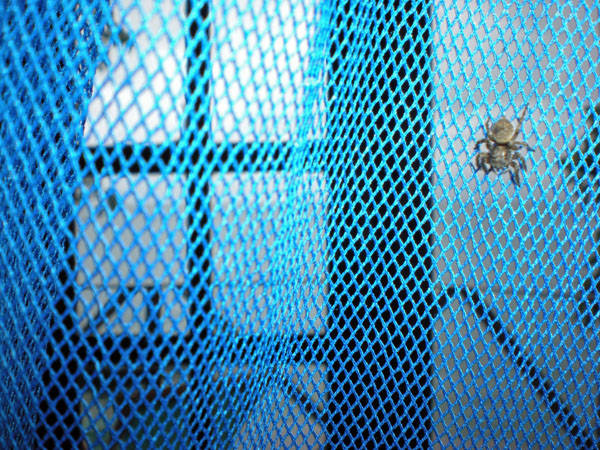 spider on mosquito net Though he doesn't look as red as he really is