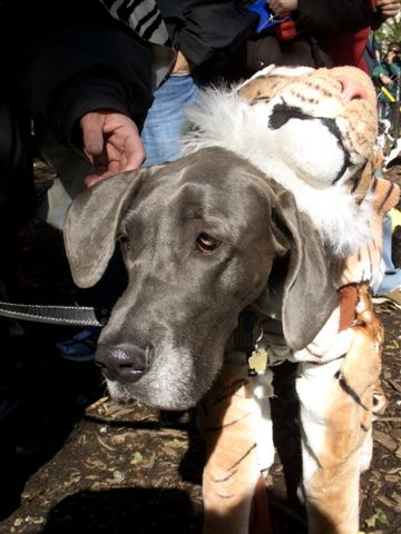 Halloween Doggie Style: The 16th Annual Tompkins Square ...