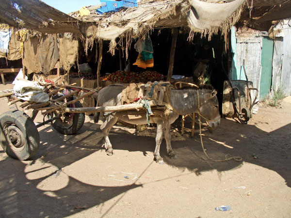 donkeys in Garissa market