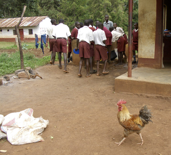 Sauri school with rooster