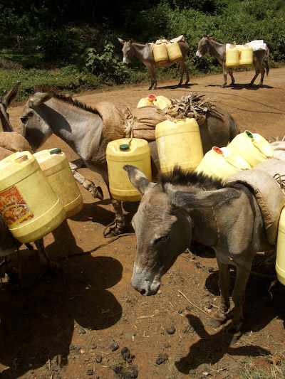 water donkeys