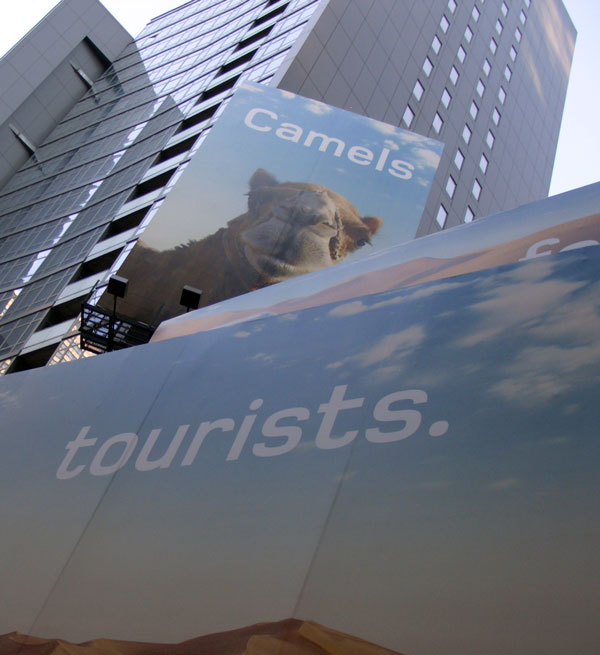 camel tourists